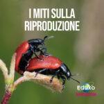 Read more about the article I miti sulla riproduzione