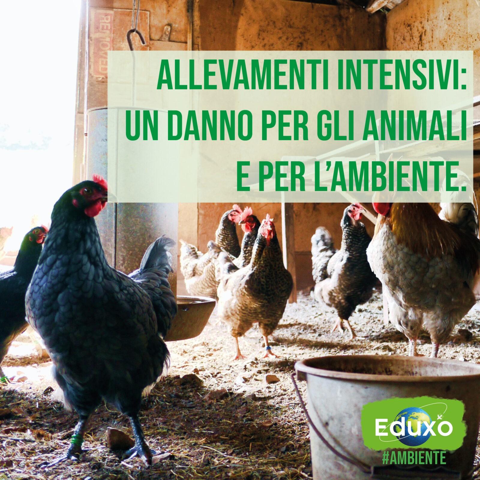 Allevamenti intensivi: un danno per gli animali e per l'ambiente