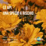 Read more about the article Le api, una specie a rischio
