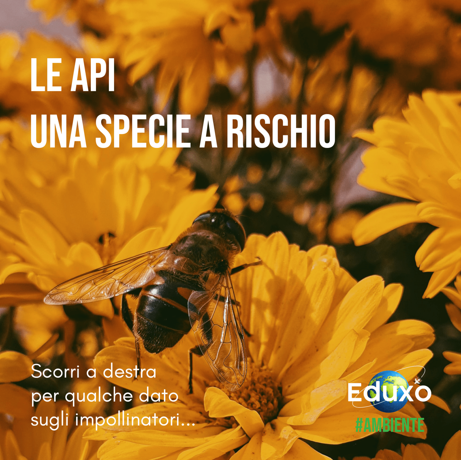 You are currently viewing Le api, una specie a rischio