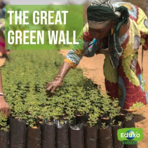 Read more about the article The Great Green Wall