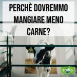 Read more about the article Perché dovremmo mangiare meno carne?