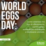 Read more about the article World Eggs Day: come orientarsi tra tipo di allevamento, certificazioni, sostenibilità ambientale e benessere animale