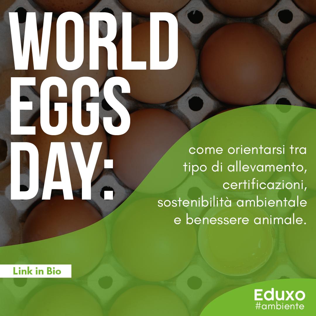 World Eggs Day: come orientarsi tra tipo di allevamento, certificazioni, sostenibilità ambientale e benessere animale
